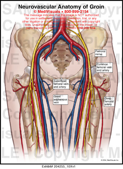 Male Groin Anatomy 3306021 Follow4morefo