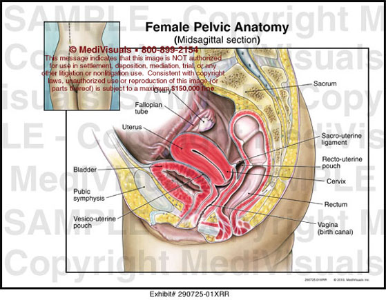 Female Pelvic Anatomy - 290725-01XVesicouterine Pouch