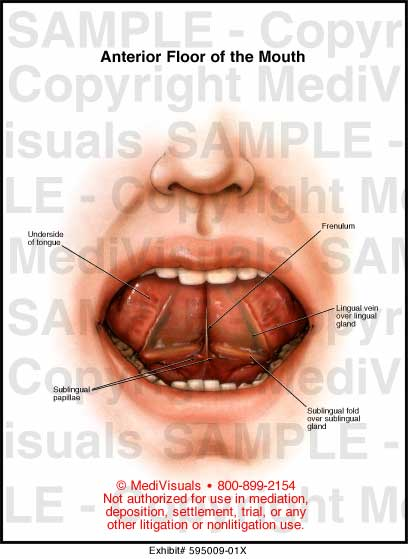 Underside Tongue Anatomy Lektonfo