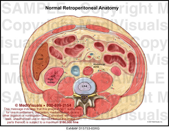 Normal Retroperitoneal Anatomy MediVisuals Medical Illustration